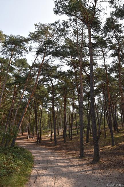 brunssummerheide bos