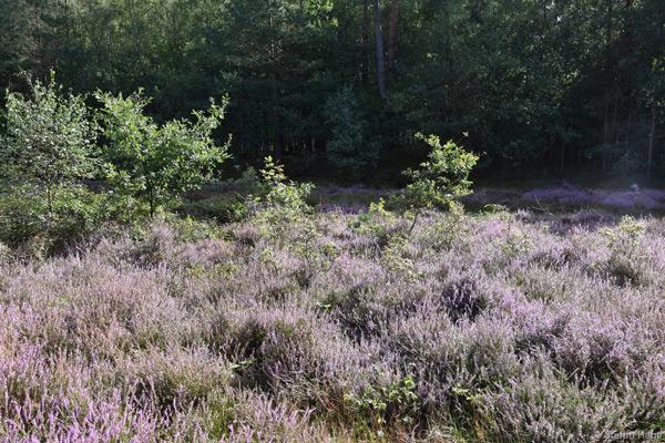 Soesterberg Heide