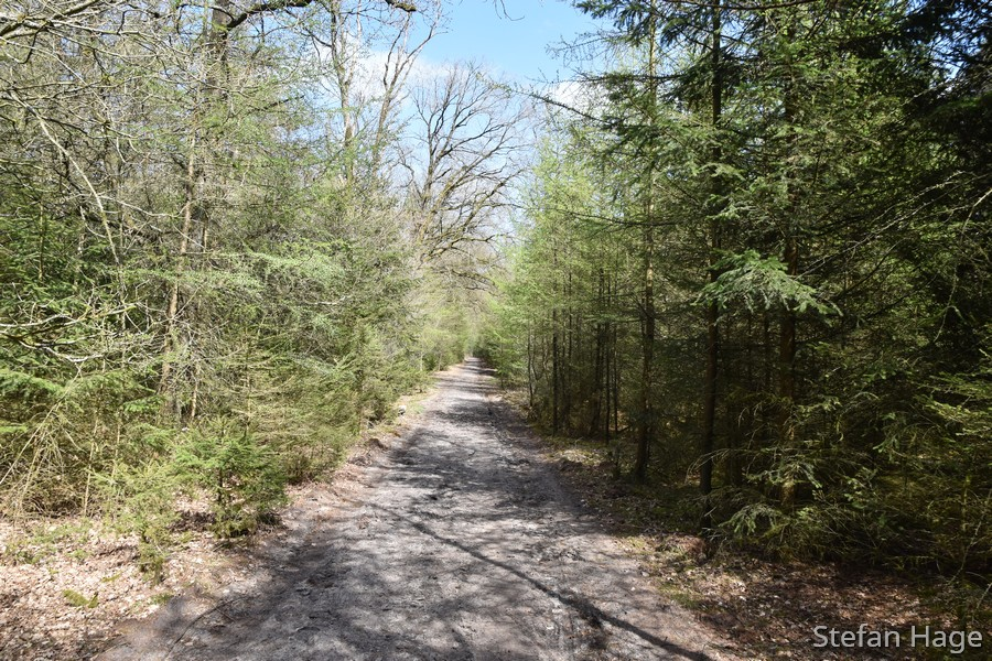 Drents-Friese Wold routes